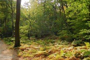 A calm, still woodland