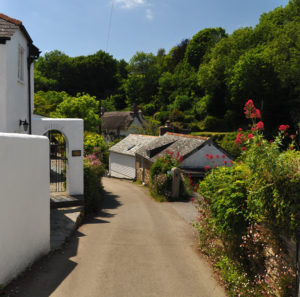 A track through pretty white cottages and a hedgerow on the left with flowers